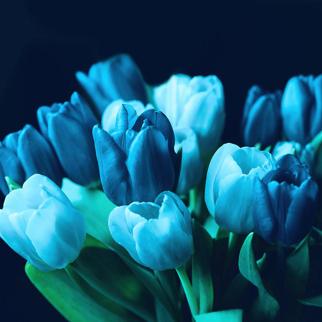 turquoise blue wallpaper
