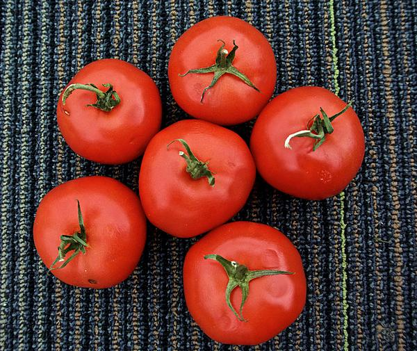 "Weekly Challenge Apr 29 - May 06: ""Fruity""-tomatoes.jpg"