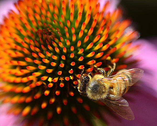 """Weekly Challenge July 22 - 29: Topic """"Up Close""""-_dsc0604.jpg"""