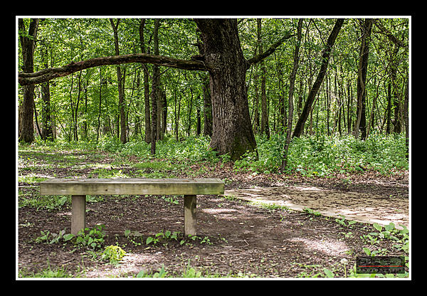 Weekly Challenge May 29 - June 4: Chair(s)/Bench(es)-bench-004.jpg