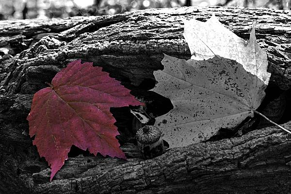 Weekly Challenge Nov. 20 - 26: Selective Color-_dsc0144_11-bw.jpg