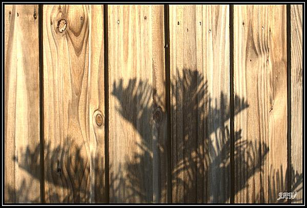Weekly Challenge July 1 - 7: Golden Hour or Shadows-_71d2957_web.jpg