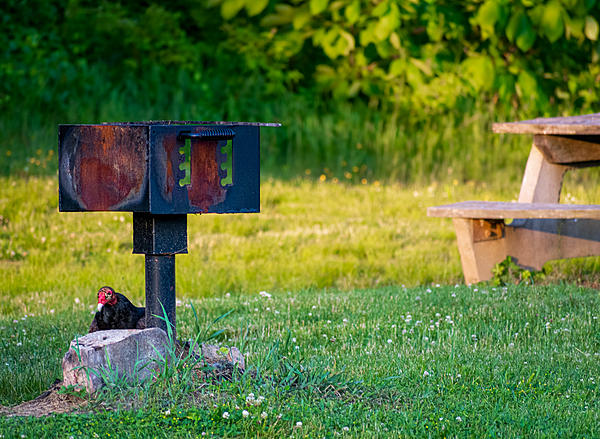 Weekly Challenge  June 2-8: Out of Place-uninvited-guest-6.jpg