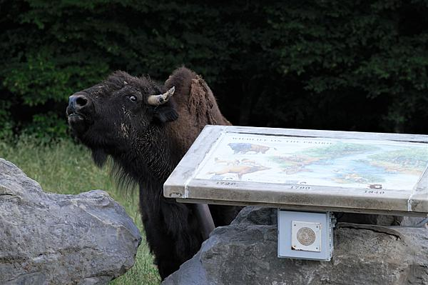 Weekly Challenge  June 2-8: Out of Place-bison-sign-resized.jpg