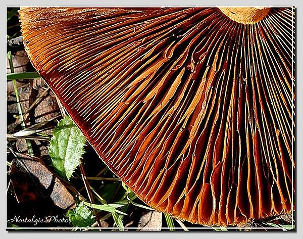 Weekly Challenge Sept. 15-22:  Changing Seasons-buttonmushroomframed.jpg