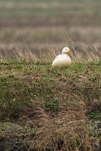 Post your birds (2)-_dsc2641.jpg