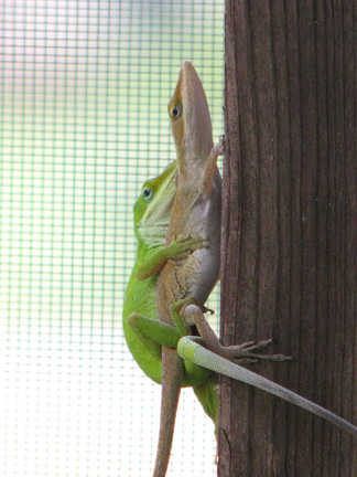 Let's see some reptiles...-lizzard2.jpg