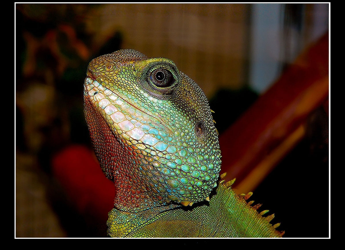 Let's see some reptiles...-china-water-dragon.jpg