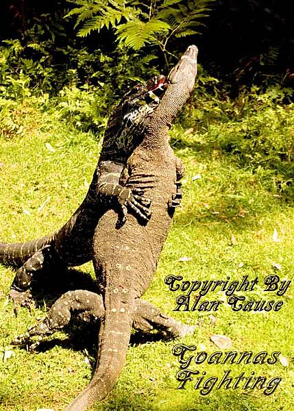 Let's see some reptiles...-indian-head-sep-07-310.jpg