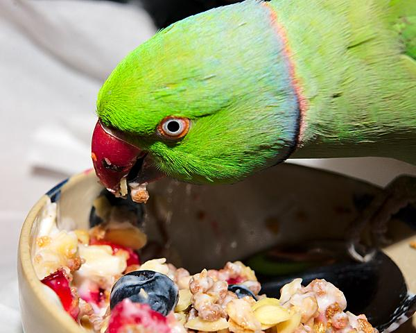 Polly wants a Picture - Post your Parrot Pics-dsc_1104-kiwi-july-2015-0007-2015-07-18t08_53_15.jpg