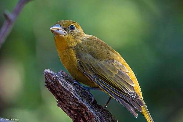 Post your birds (2)-august-20-2015untitled-4277-2.jpg