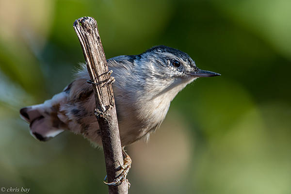 Post your birds (2)-august-20-2015untitled-4257.jpg