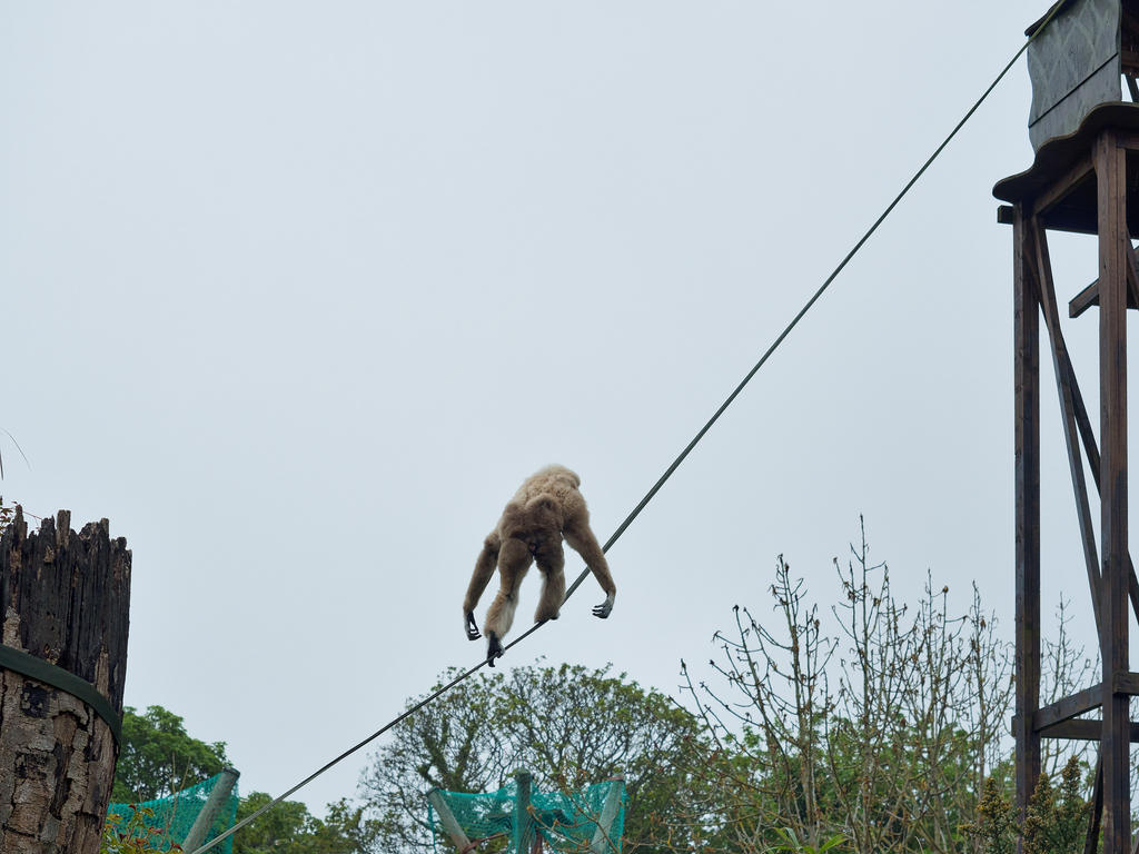 Post your zoo photos-tightrope.jpg
