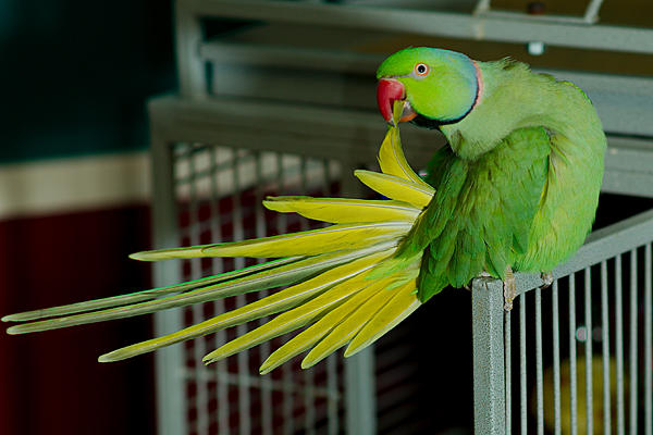 Polly wants a Picture - Post your Parrot Pics-dsc_5006-kiwis-home-nov-2016-0006.jpg