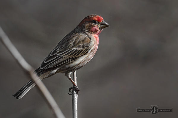 Post your birds (2)-dh7_6160.jpg