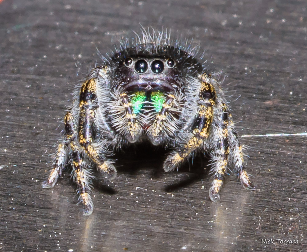 Post your spiders-d72_3256.jpg
