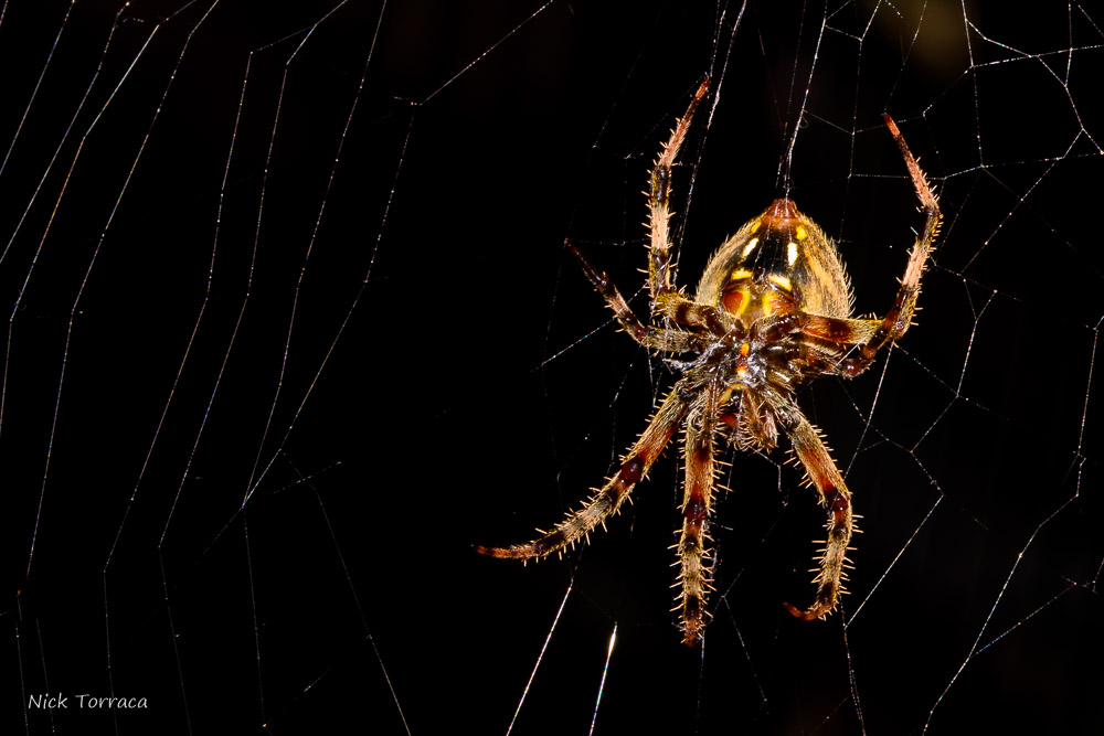 Post your spiders-d72_3788.jpg