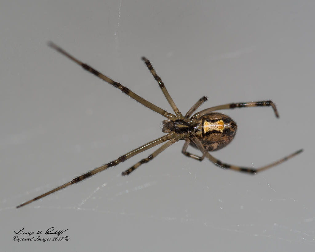 Post your spiders-w_dsc_2911.jpg