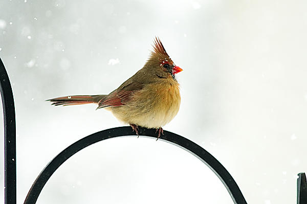 Post your birds (2)-ldc_5444w.jpg