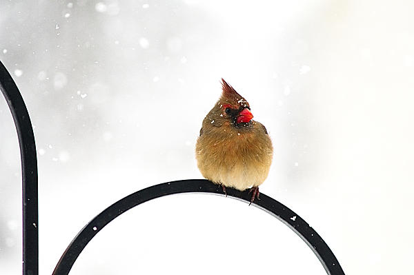 Post your birds (2)-ldc_5455w.jpg