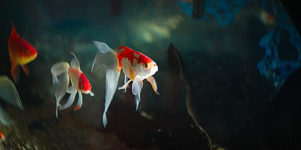 Fish photos?-dsc_3509-sm-fishtank-godox-ad200-first-use-0030.jpg