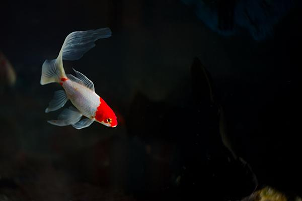 Fish photos?-dsc_3526-sm-fishtank-godox-ad200-first-use-0028.jpg