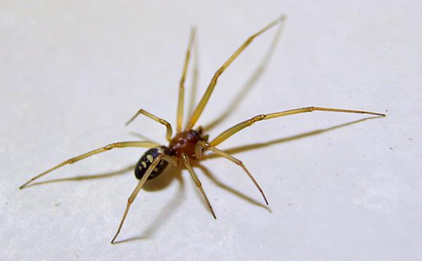 Post your spiders-zsc_9650g1kv.jpg