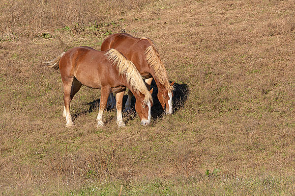Post your Horse shots-ahw_4451.jpg