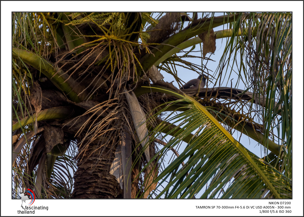 Post your birds (2)-behind-brenches-1.jpg