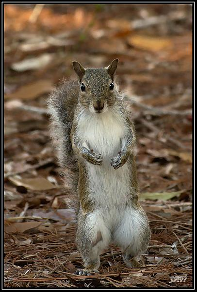 Post your Squirrel pictures-_71d7162_01.jpg