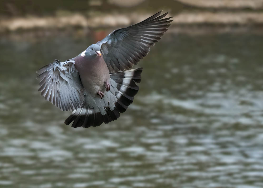 Post your Birds in Flight-mik_1921.jpg