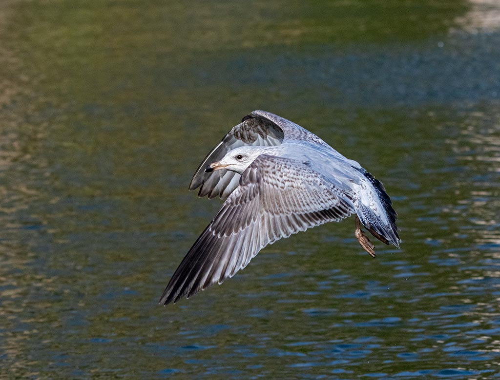 Post your Birds in Flight-mik_2001.jpg