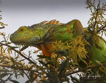 Let's see some reptiles...-skippy-1-1.jpg