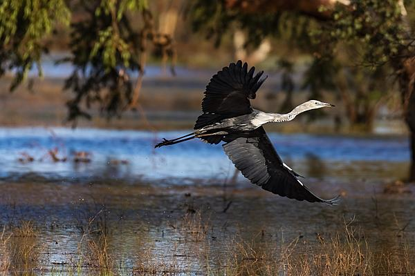 Post your Birds in Flight-stork-take-off.jpg
