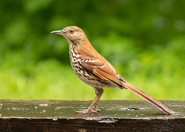 Post your birds (2)-kendall-campground-5681.jpg