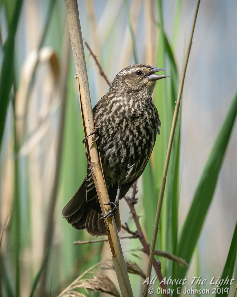 Can you help ID this bird please?-_dsc2014-low-res.jpg