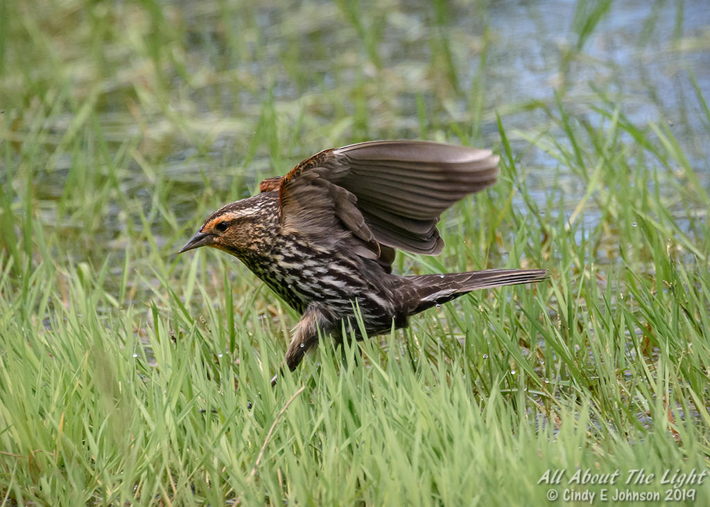 Post your birds (2)-_dsc2050-low-res.jpg