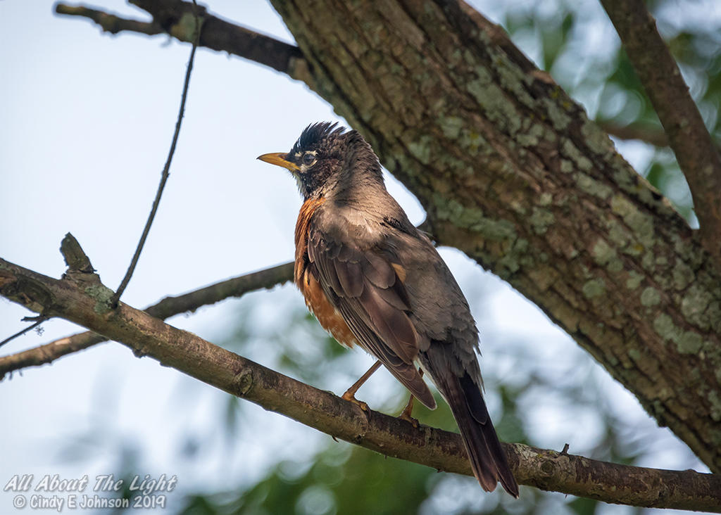 Post your birds (2)-_dsc2024-low-res.jpg