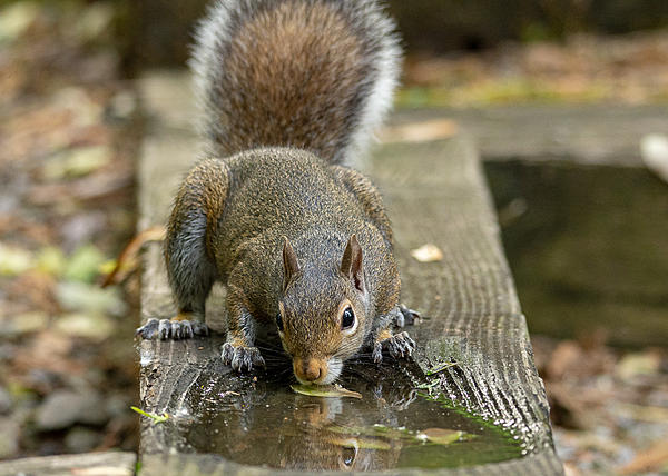 Post your Squirrel pictures-lake-cumberland-weekend-9146.jpg