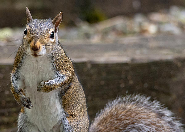 Post your Squirrel pictures-lake-cumberland-weekend-9143.jpg