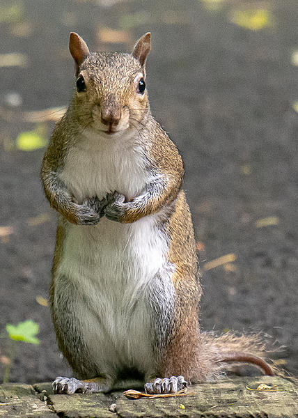 Post your Squirrel pictures-lake-cumberland-weekend-9162.jpg