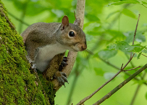 Post your Squirrel pictures-lake-cumberland-weekend-9211.jpg