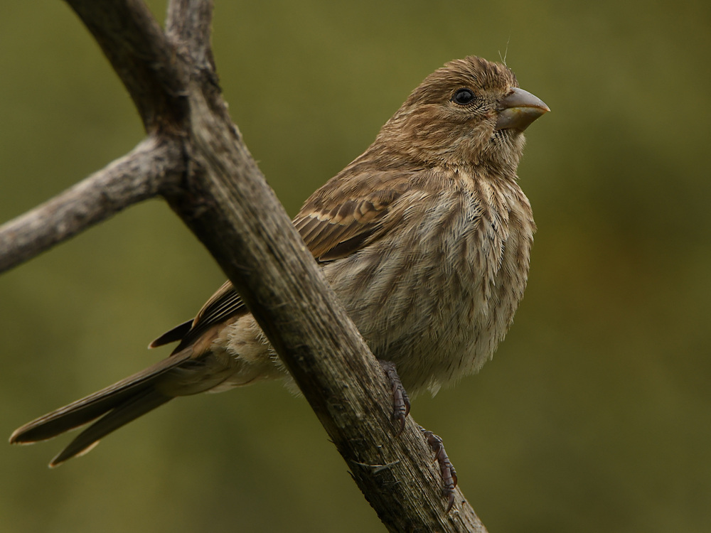 Post your birds (2)-sparrow7.jpg