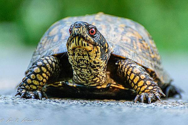 Let's see some reptiles...-20190525-_d711680.jpg