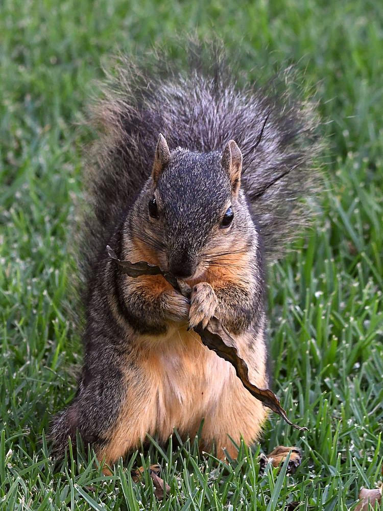 Post your Squirrel pictures-squirrel2.jpg