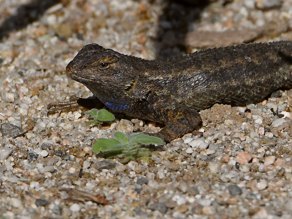 Let's see some reptiles...-lizard3.jpg