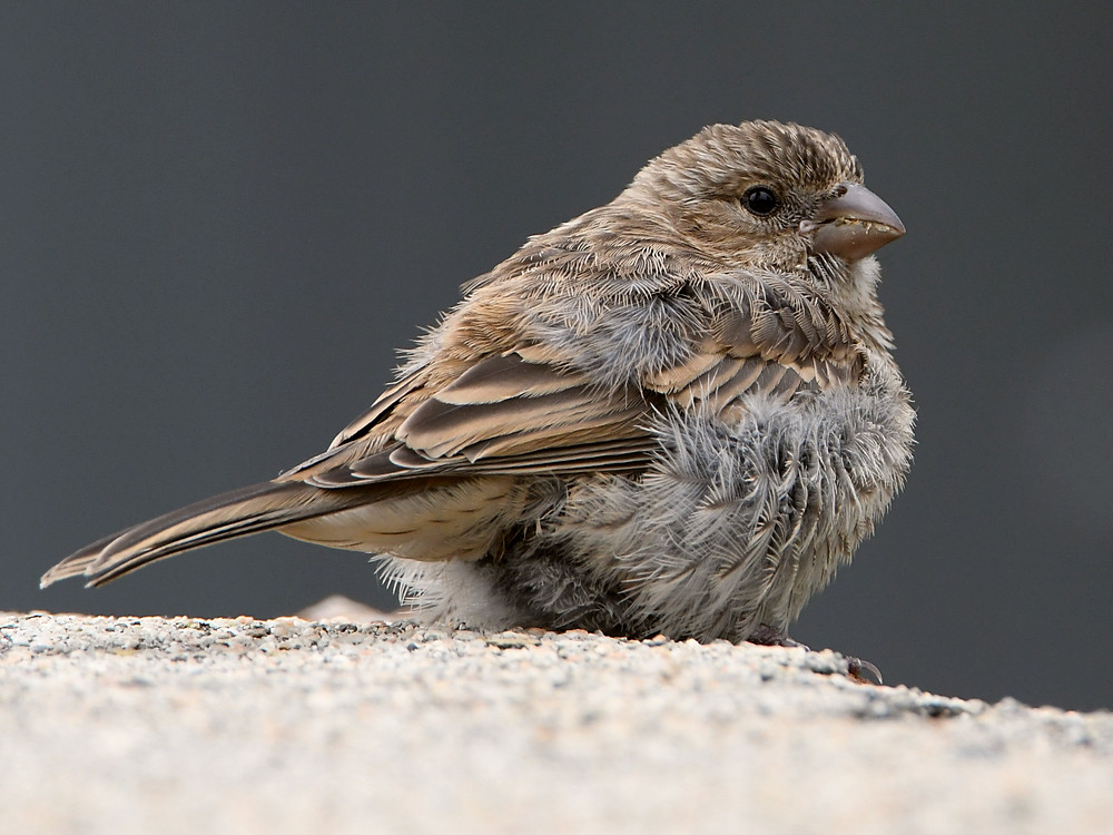Post your birds (2)-finch2.jpg