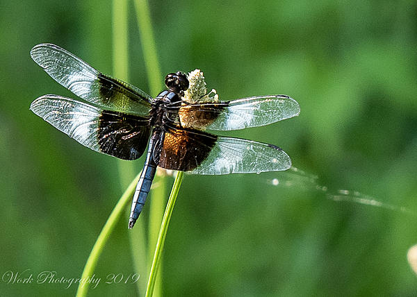 dragonflies and bees/wasps-untitled-shoot-6663.jpg