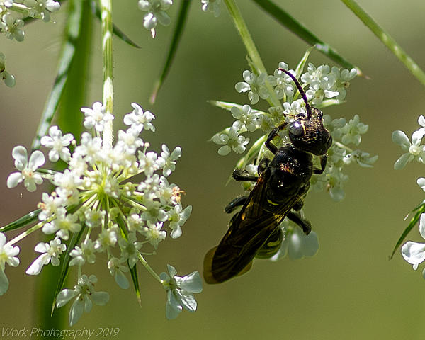 Post your dragonflies and bees/wasps-cove-springs-5300.jpg