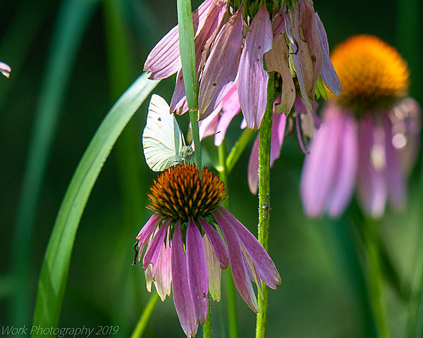 Post your Moths & Butterflies-cove-springs-5291.jpg